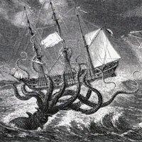 Mực khổng lồ - bí ẩn 150 năm mới có lời giải