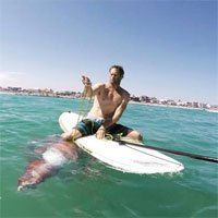 Mực khổng lồ bị thương được người lướt ván kéo vào bờ