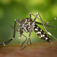 Muỗi thích người có nhóm máu nào hơn?