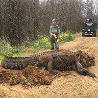 Mỹ: Bắt được cá sấu siêu