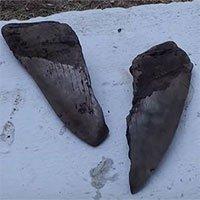 Mỹ: Phát hiện răng cá mập Megalodon thống trị biển cả 3 triệu năm trước