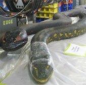 Mỹ tiến hành thử nghiệm mẫu robot sông Anaconda