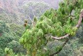 Năm 2014 Việt Nam phát hiện 126 loài mới
