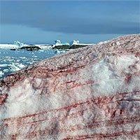 Nam Cực bất ngờ xuất hiện