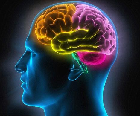 Não bộ của con người khó thông minh hơn nữa