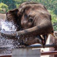 Não lớn hơn, nhưng tại sao voi không thông minh hơn con người?