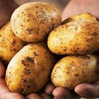 NASA hợp tác với Peru thực hiện dự án trồng khoai tây trong môi trường sao Hỏa