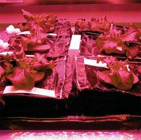 NASA sẽ trồng rau diếp trên vũ trụ