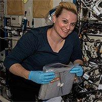 NASA trồng thành công cải củ trong không gian