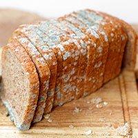 Nếu bánh mỳ bị mốc một nửa, bạn có thể ăn phần bánh còn lại chưa bị mốc không?