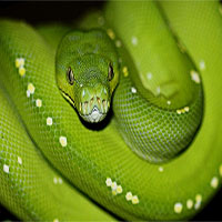 Nếu đã lỡ sợ rắn thì đừng bao giờ đến Australia