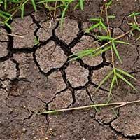 Nếu khí hậu tăng lên 2 độ C có thể giải phóng hàng tỷ tấn carbon trong đất