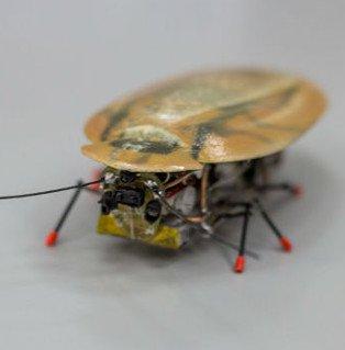 Nga chế tạo thành công robot do thám hình con gián