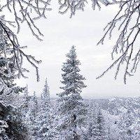 Nga: Người đàn ông sống sót trong rừng dưới nhiệt độ âm 31 độ nhờ thứ này