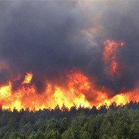 Nga phát triển mìn chống cháy rừng