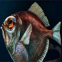 Ngạc nhiên: Cá sống trong bóng tối đại dương vẫn nhìn thấy màu sắc