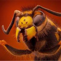 Ngắm các loài côn trùng