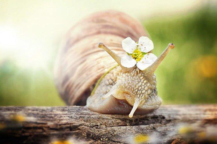 Ngắm chùm ảnh đẹp như thiên thần của ốc sên