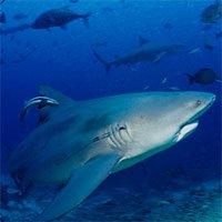 Ngày càng có nhiều người bị cá mập tấn công hơn và đây là lý do thực sự đằng sau