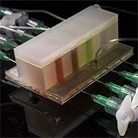Nghiên cứu hệ vi sinh bằng ruột nhân tạo