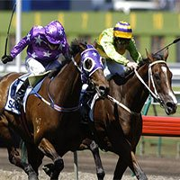 Nghiên cứu mới cho thấy: Quất roi không khiến ngựa chạy nhanh hơn