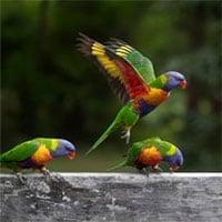 Nghiên cứu mới cho thấy, số chim trên thế giới nhiều gấp 6 lần số người