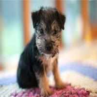 Nghiên cứu mới phát hiện khả năng đặc biệt của loài chó