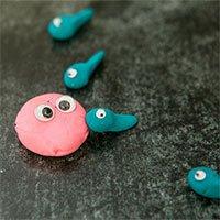 Nghiên cứu: Tinh trùng nào được chọn là do trứng quyết định!