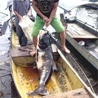 Ngư dân bắt