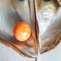 Ngư dân nghèo nhặt được ngọc màu cam hiếm có, được trả giá tới 7,6 tỷ đồng