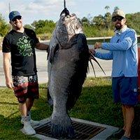 Ngư dân ở Mỹ câu được cá mú khổng lồ nặng 133kg