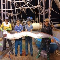Ngư dân Thanh Hóa bắt được cá hố