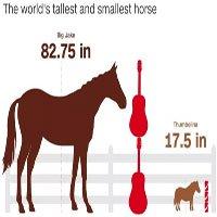 Ngựa cao nhất và ngựa lùn nhất thế giới