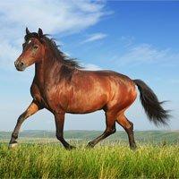 Ngựa cũng thông minh như cá heo và chim bồ câu
