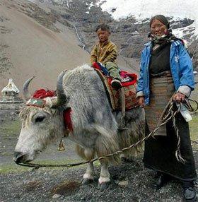 Người Tây Tạng sống được trên núi cao nhờ