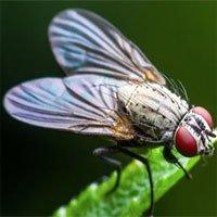 Nguồn gốc đôi cánh của côn trùng từ đâu?