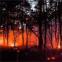 Nguyên nhân gây ra các đợt nắng nóng bất thường và cháy rừng gần đây