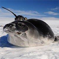 Nhà khoa học giải mã những hố băng ở Nam Cực
