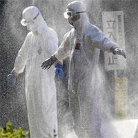 Nhật Bản phát hiện chủng cúm gia cầm nguy hiểm