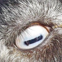 Nhìn bức ảnh này, bạn đoán xem đây là mắt của con gì? Câu trả lời có thể khiến bạn... hết cả hồn đấy!