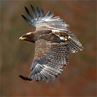 Nhóm nghiên cứu suýt phá sản vì mải ngắm đại bàng mà không ngờ chúng đã bay quá xa