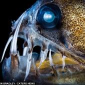 Những bóng ma lởn vởn dưới đáy đại dương