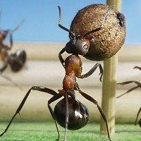 Những bức ảnh kiệt tác về loài kiến khiến bạn kinh ngạc