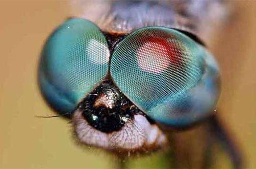 Những cặp mắt dị thường nhất của động vật (I)