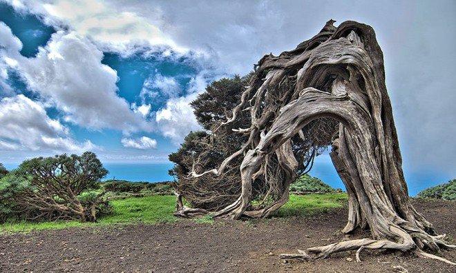 Những cây cổ thụ có hình dáng độc và lạ trên khắp thế giới
