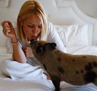 Những chú lợn cưng