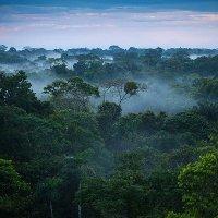 Những điều bí ẩn trong rừng Amazon khiến bạn