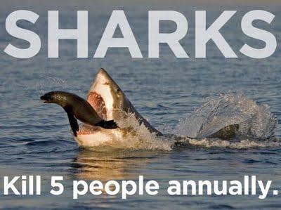 Những điều quen thuộc còn giết người giỏi hơn cả cá mập