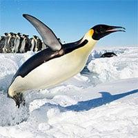 Những điều thú vị bạn chỉ có thể tìm thấy ở châu lục lạnh nhất thế giới