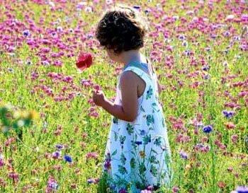 Những điều thú vị về các loài hoa
